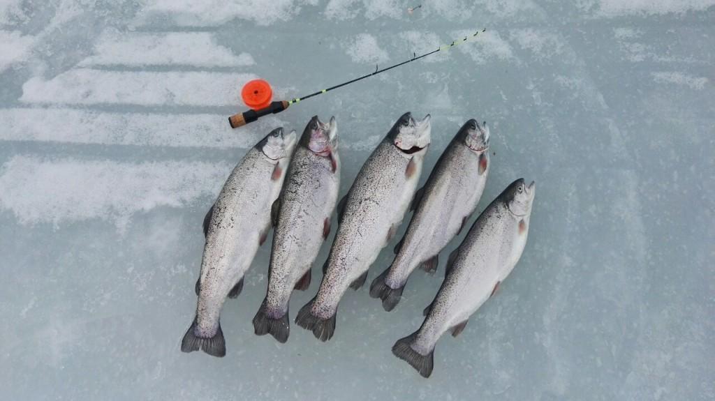 Дневной улов одного рыбака
