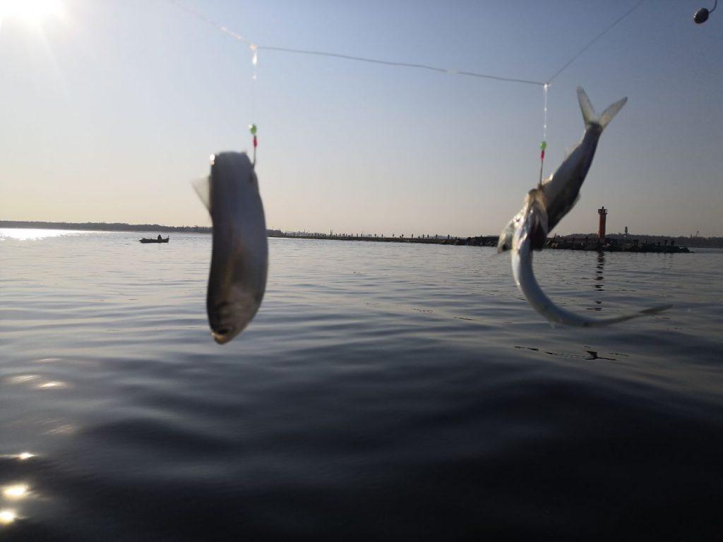 один крючок - две рыбы.
